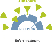When androgens attach to androgen receptors, they can help fuel prostate cancer cell growth