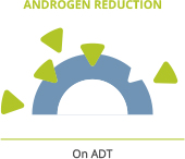 Androgen deprivation therapy lowers androgen levels
