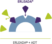 ERLEADA® blocks androgens from attaching to receptors